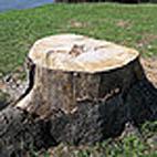 20060921205906-arbol-cortado.jpg